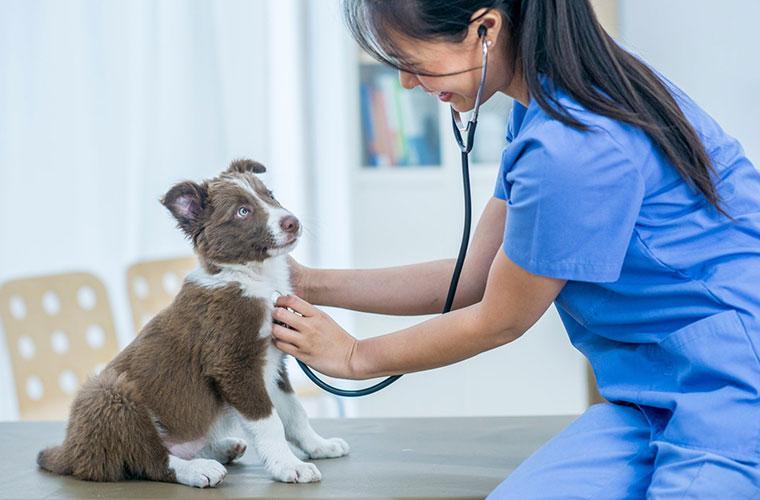 Test veterinaria 2021